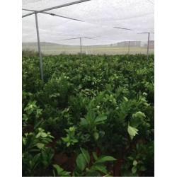 安平县出售全新料的果树防虫网直供的丝网直销耐氧化