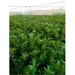 加宽的新料的脐橙网批发优质果树防虫网直销