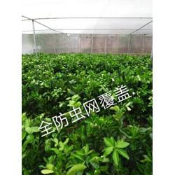 全新料的纱网脐橙网结实的果树网直销的丝网40目加厚