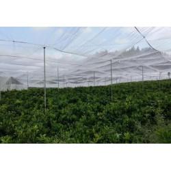 全新料的丝网耐氧化的脐橙网耐氧化的纱网果树网