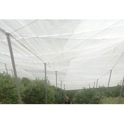 全新料的加宽的丝网结实的网子直销的脐橙网直供40目