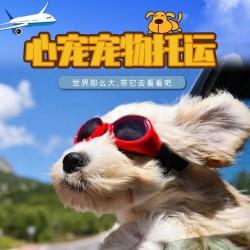 广州西安太原猫狗宠物托运服务于全国空运火车专车
